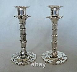 Rare Paire Victorienne 1849 Nouveauté Palm Tree Silver Tapersticks / Candlesticks